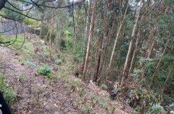 Terreno ensector Lonco parque